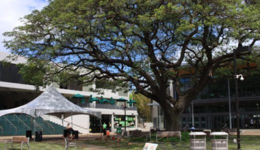 ワイキキ近くのハワイ大学マノア校を調査せよ!生協にあるグッズは絶対買うべし!【ハワイ旅行2日目】