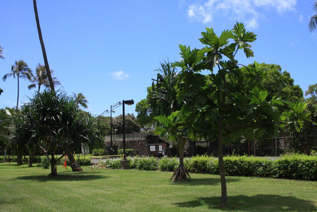 ハワイ大学の校舎内
