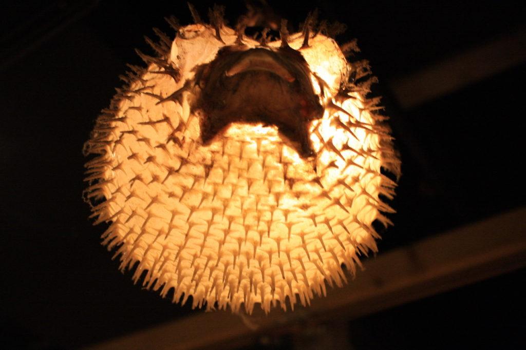 沖縄料理屋竹富島のハリセンボン