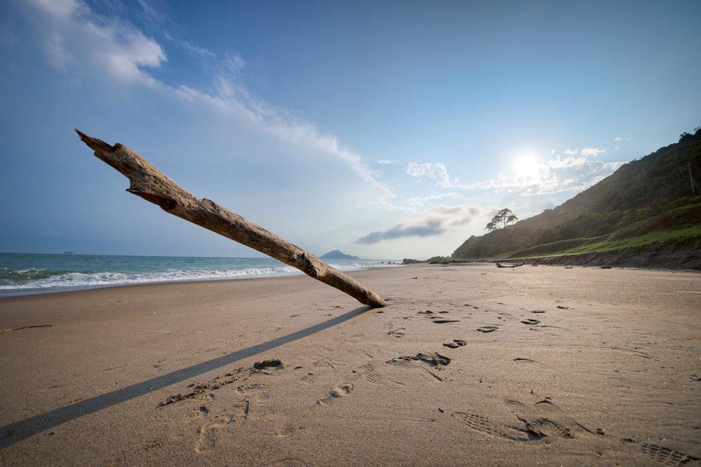 流木と砂浜
