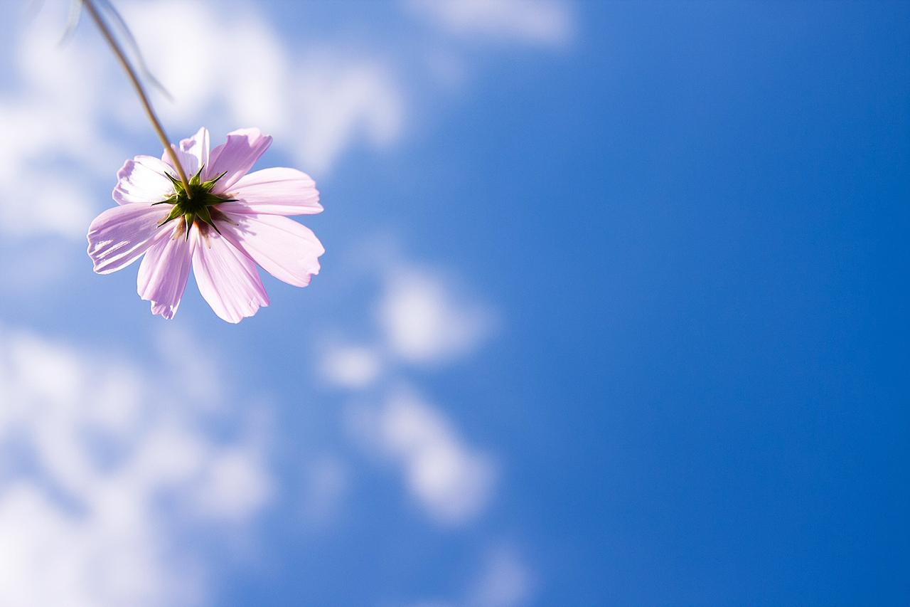 小さな幸せの見つけ方、見ようとすると見えない幸せの不思議。