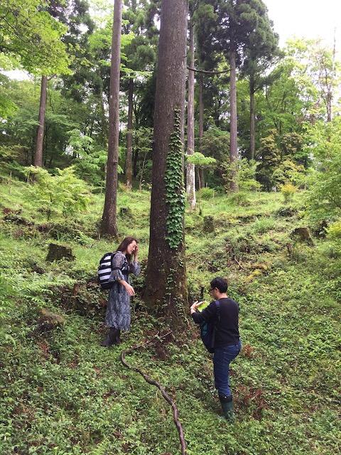 hakone_yasuraginomori_forest_15