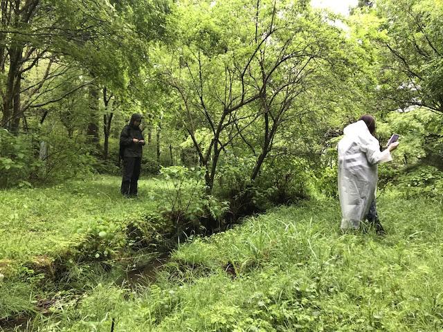 hakone_yasuraginomori_forest_2