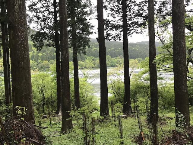 hakone_yasuraginomori_forest_3