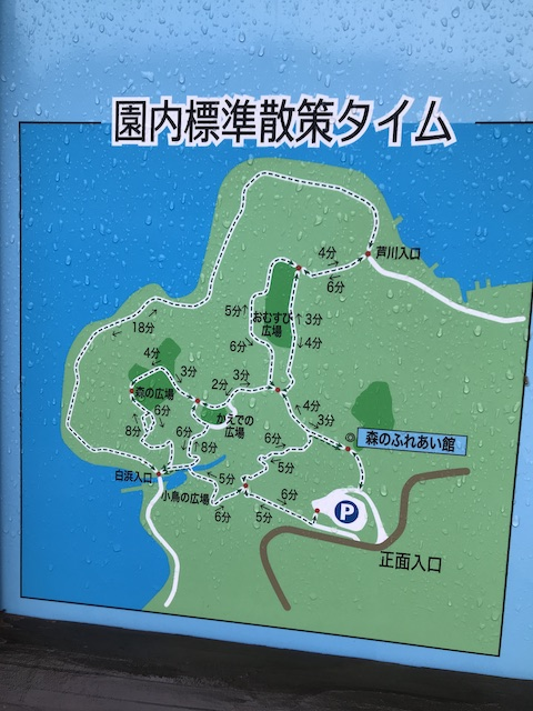 hakone_yasuraginomori_forest_4