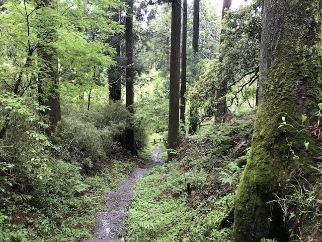 hakone_yasuraginomori_forest_8